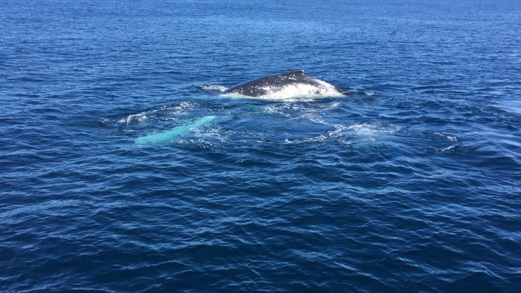 Close-up and beautiful, the whales often surfaced next to the boat!