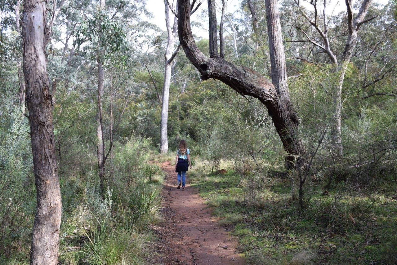 A beautiful NSW bushwalk
