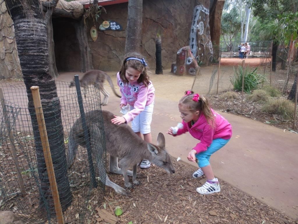 One of their favourite things to do at Dreamworld - was feed the kangaroos!