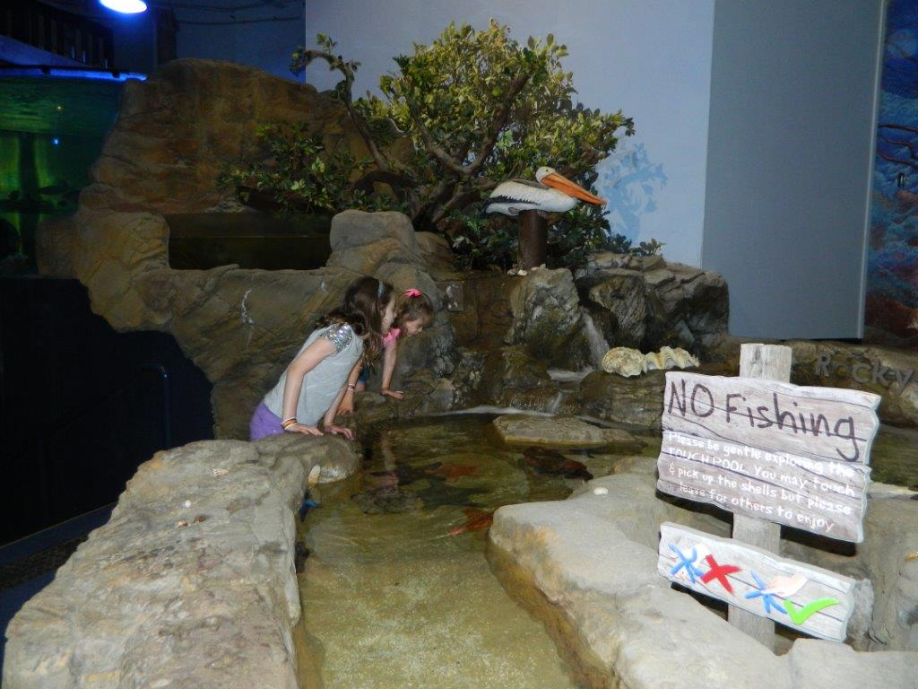 The Touch Pool in the Aquarium allows kids to be hands-on