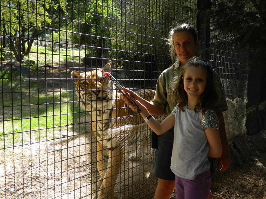 Brooke was thrilled to be feeding a tiger by-hand!