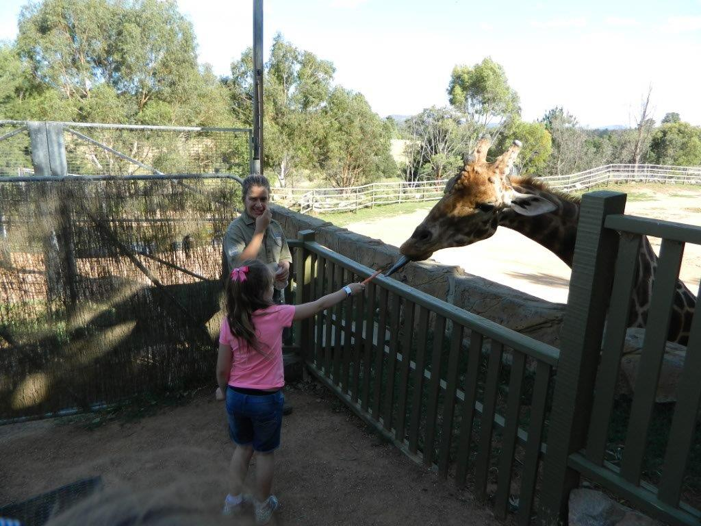 Hummer the naughty giraffe played hard to get until we pretended to leave!
