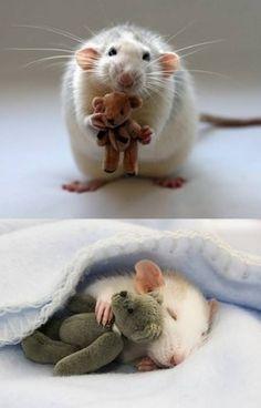 Love That Pet LOL pic!