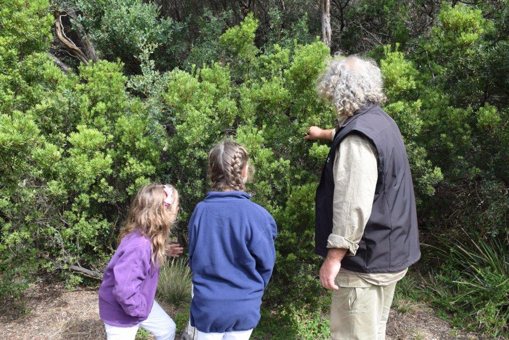 Sampling bush tucker was one of our favourite features with Brad the local guide