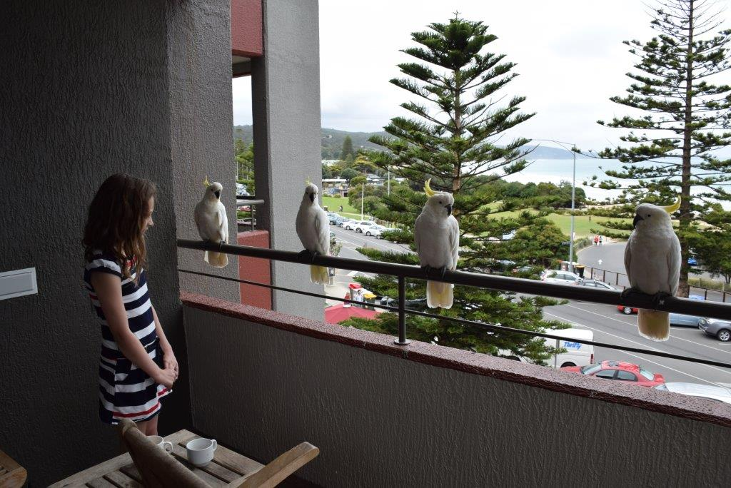 The locals were awfully friendly! Cockatoos visited our balcony often.