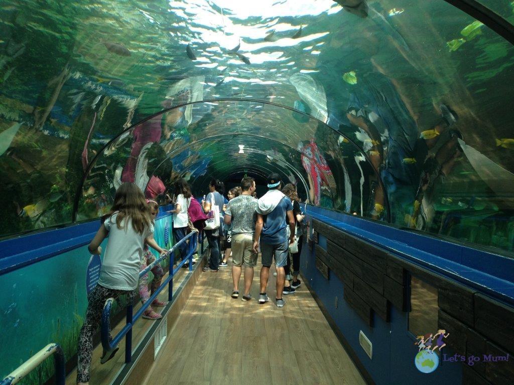 The Sydney Sea Life Aquarium walk-through aquariums