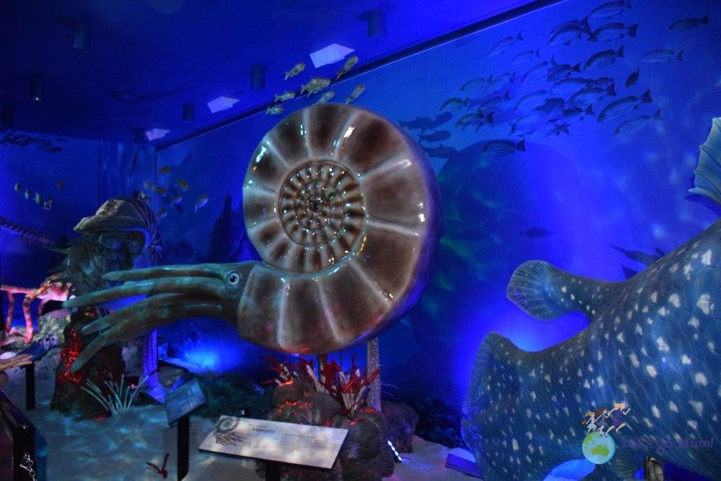 The (rather large) ammonite!