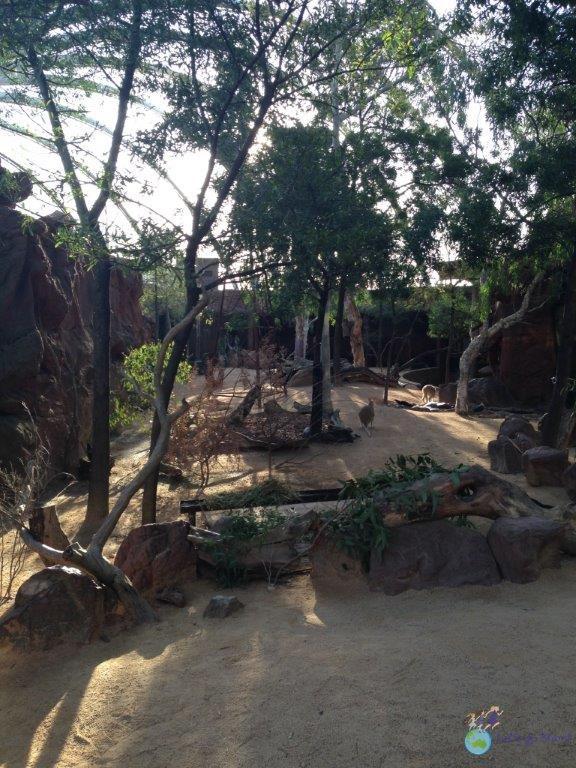 Sydney Wild Life Zoo covered Kangaroo Walk