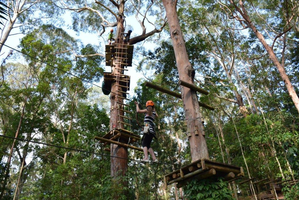 Tree climbing courses
