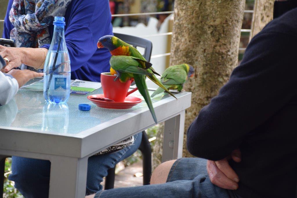 Currumbine Wildlife Park parrots