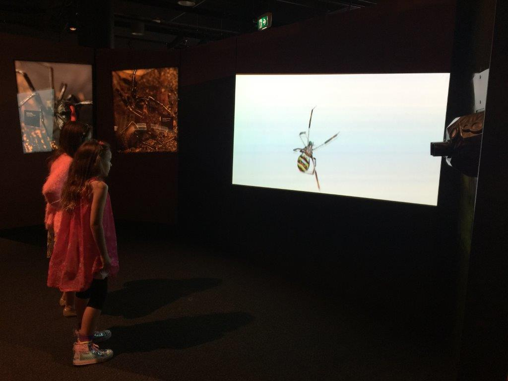 It's fun to watch enormous spiders - just so long as they stay on that screen!
