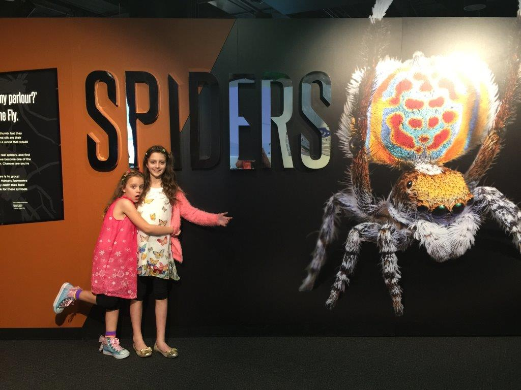 Questacon Spiders - nothing to be afraid of in here....much!