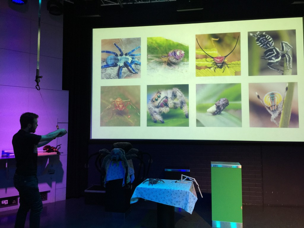 The Spiders show in the Questacon theatre has lots of fascinating facts!