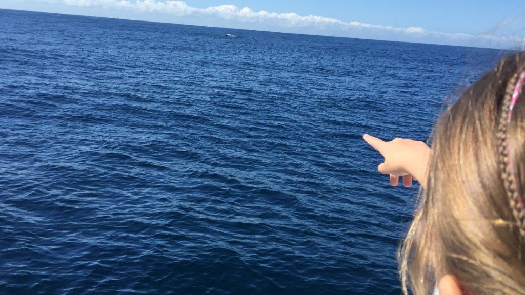 The first Humpback Whale pod is spotted!