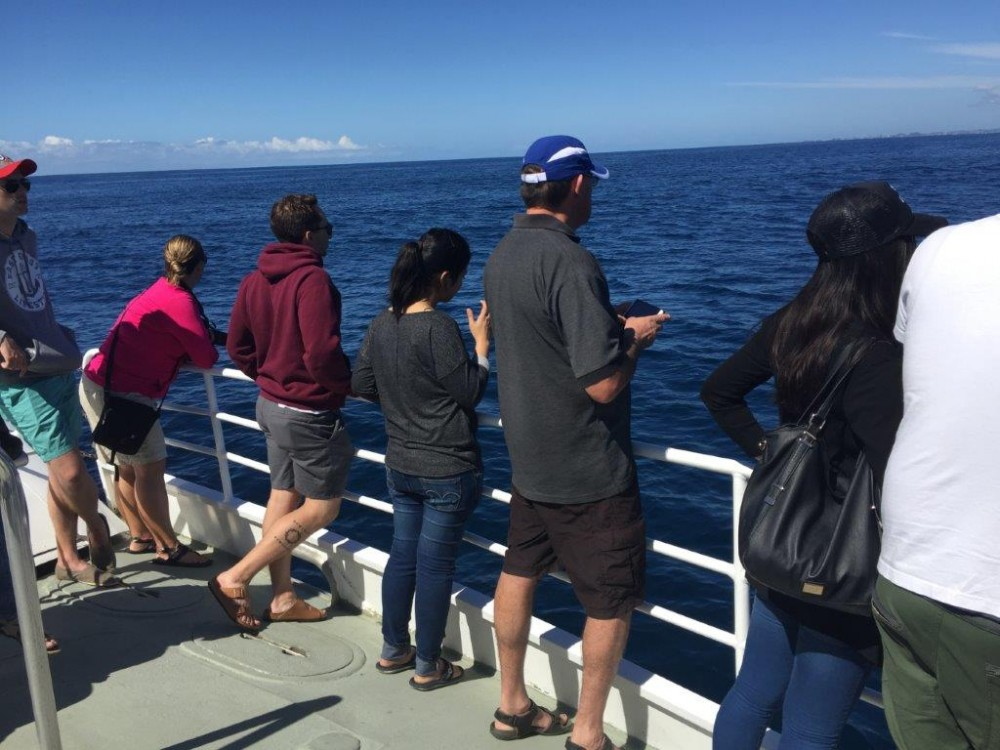 Whale-spotting on the front deck of the Spirit Of Gold Coast
