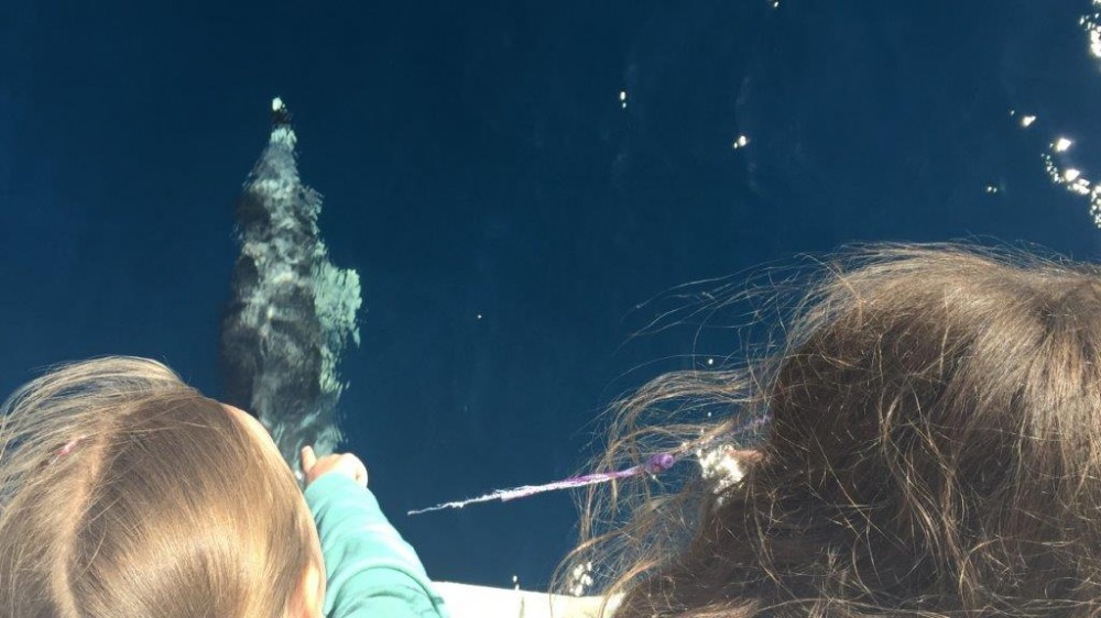 Dolphins swimming right below the children at the front of the boat