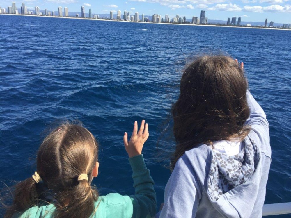 Everyone on board waved goodbye to our last pair of whales as we turned for home