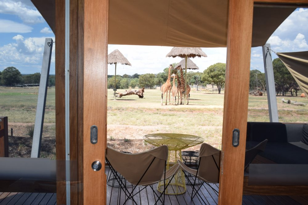The view from the bed - this is truly sleeping with giraffes!