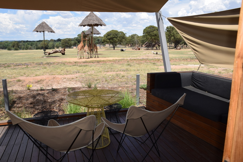 A view like no-other - the giraffes spent most of their time right in front of the lodges