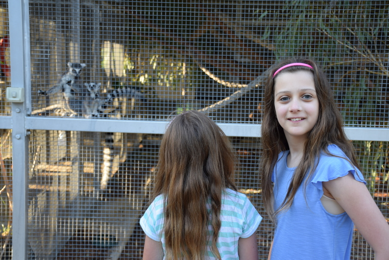 Mum, they're right there! - the kids loved seeing the Lemur babies