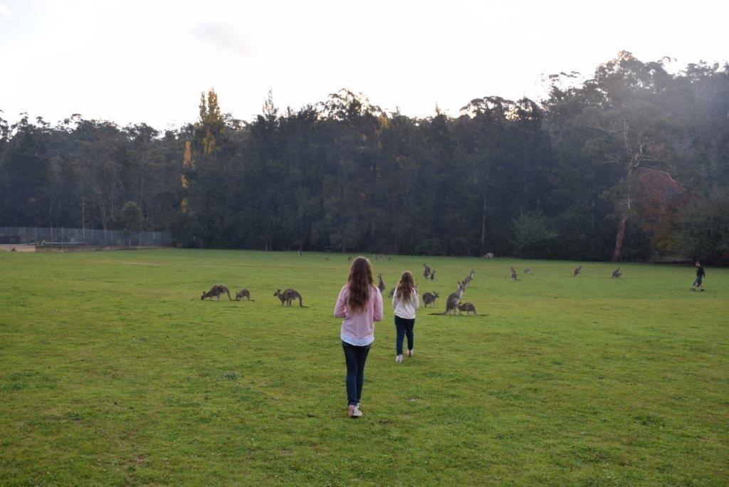 Kangaroos are everywhere at Wombeyan Caves - and you can get up-close to them too!