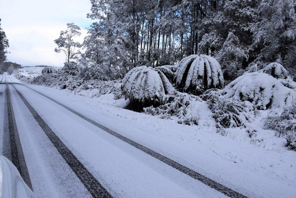 Franklin-Gordon Wild Rvers National Park, Tasmana
