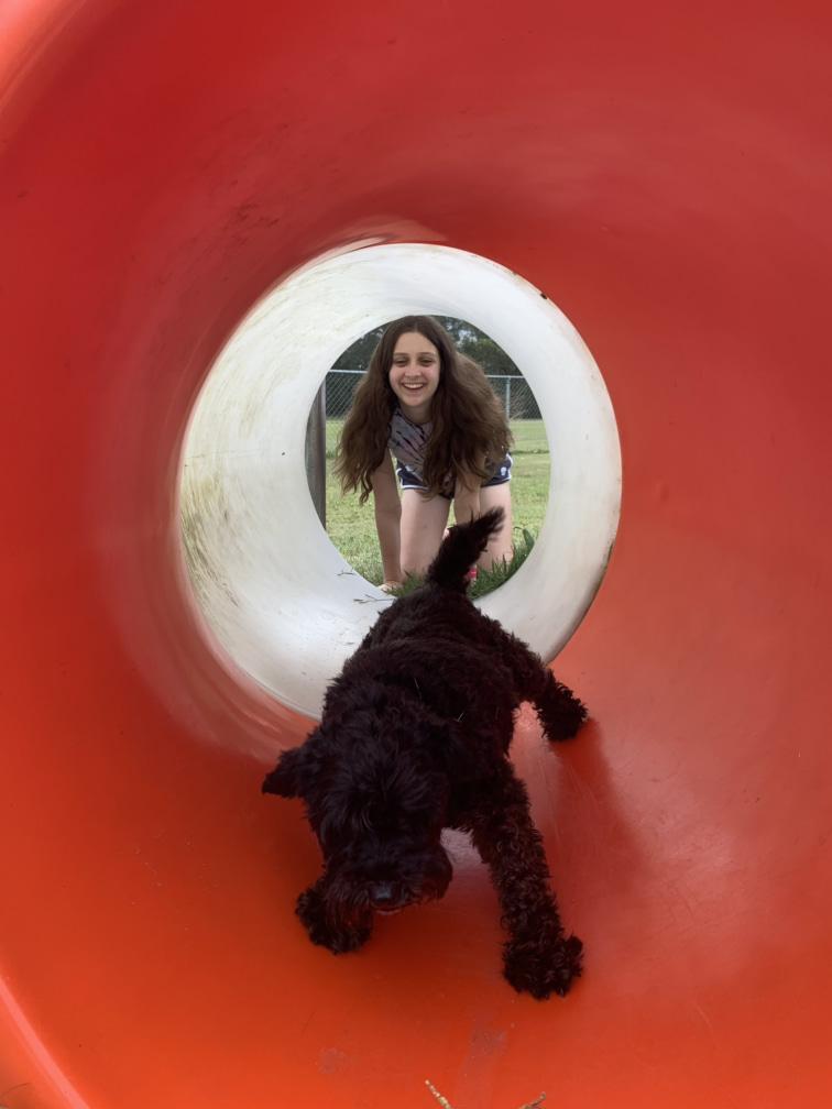 Dog park at Big4 Queensland
