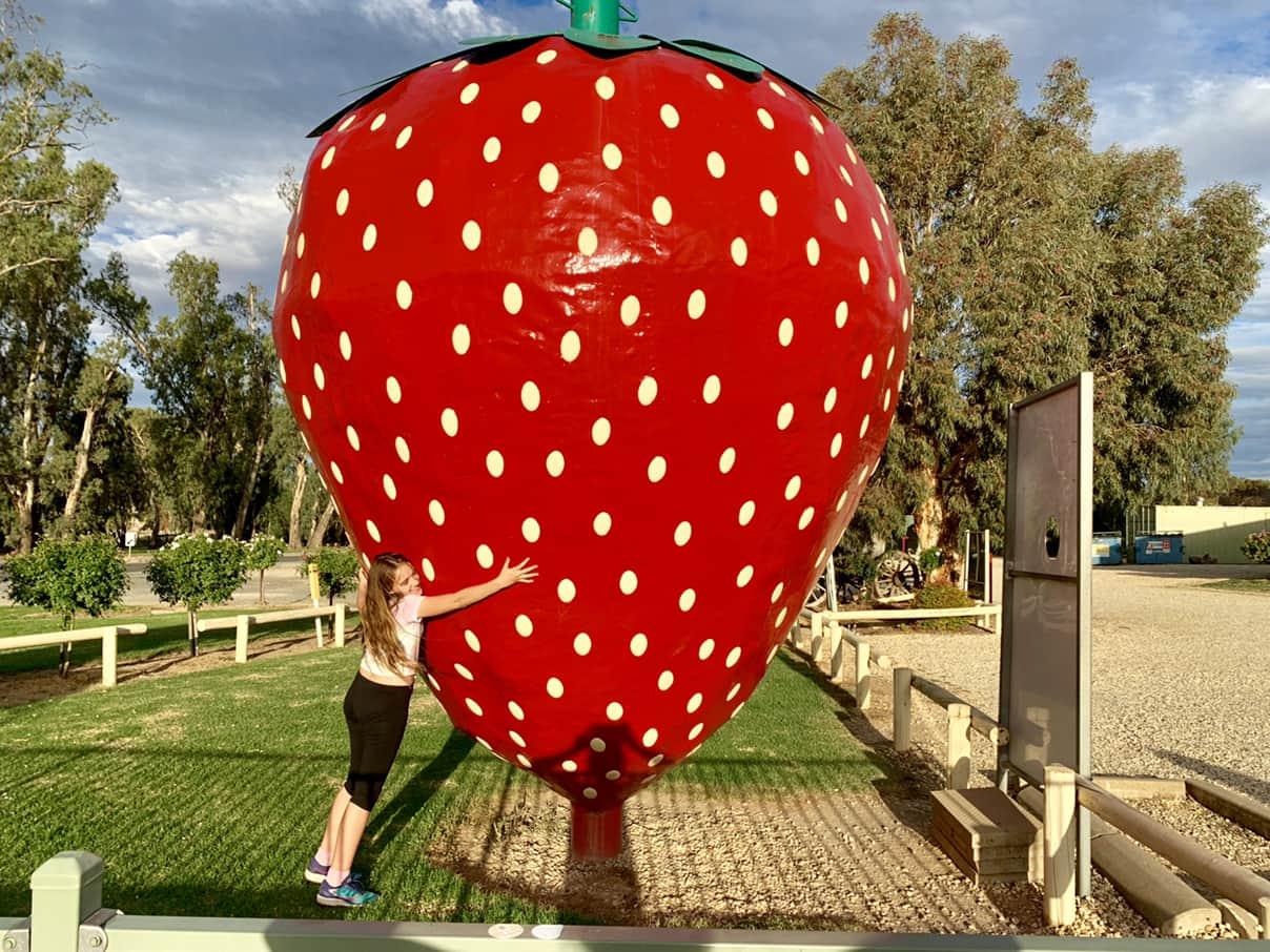 Australia's big things-The Big Strawberry