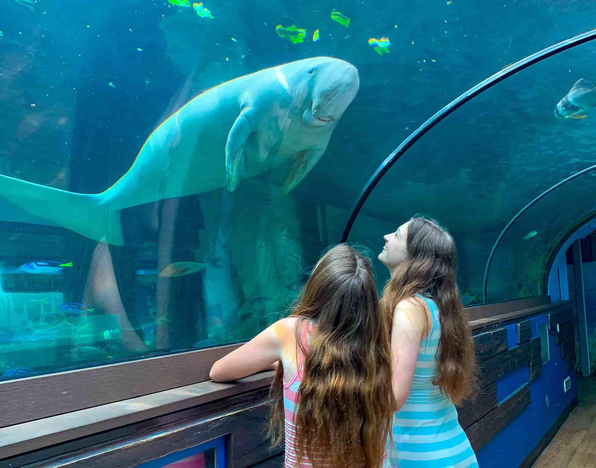 Sydney Aquarium dugong