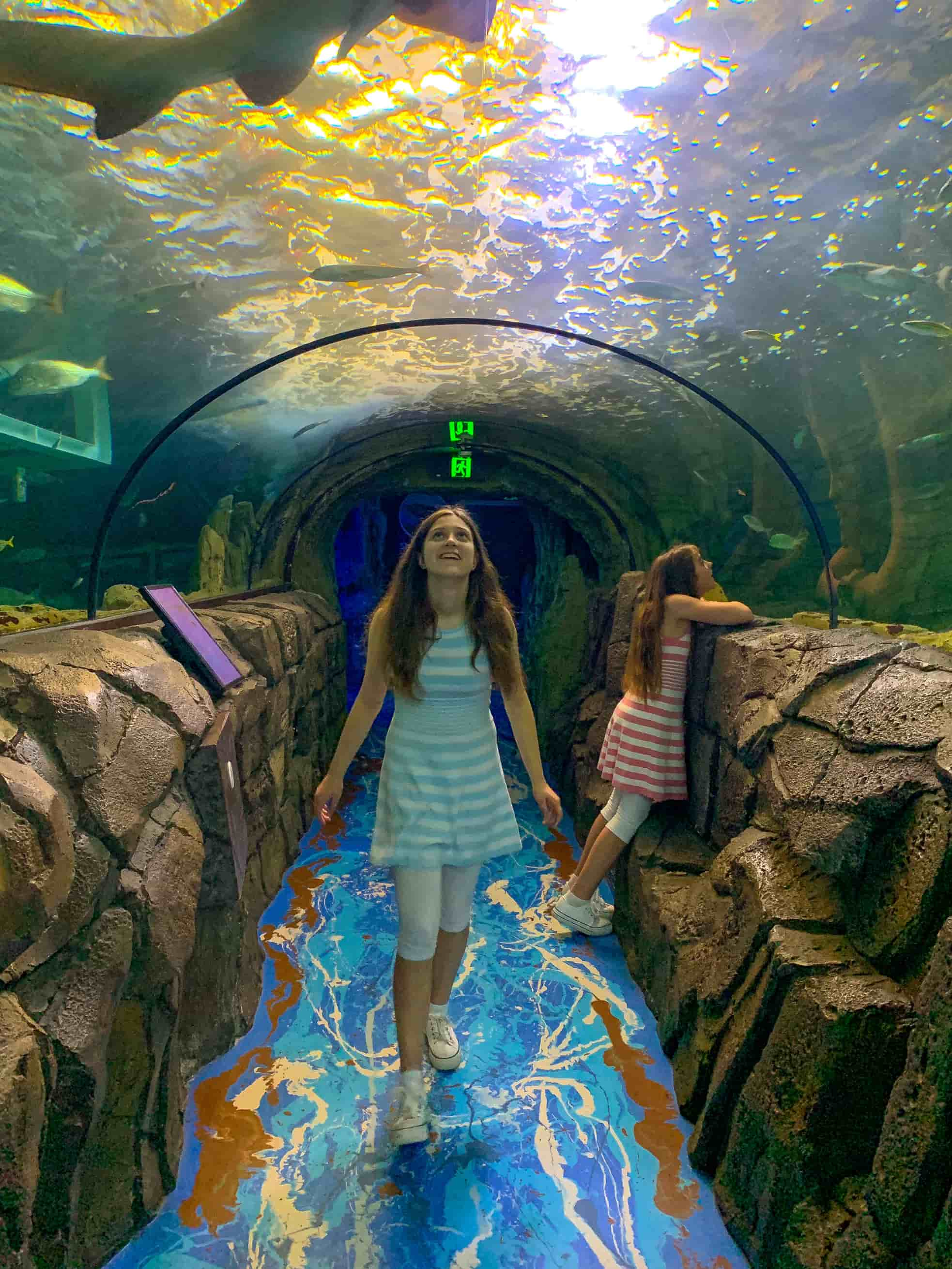 Sydney Aquarium glass tunnels