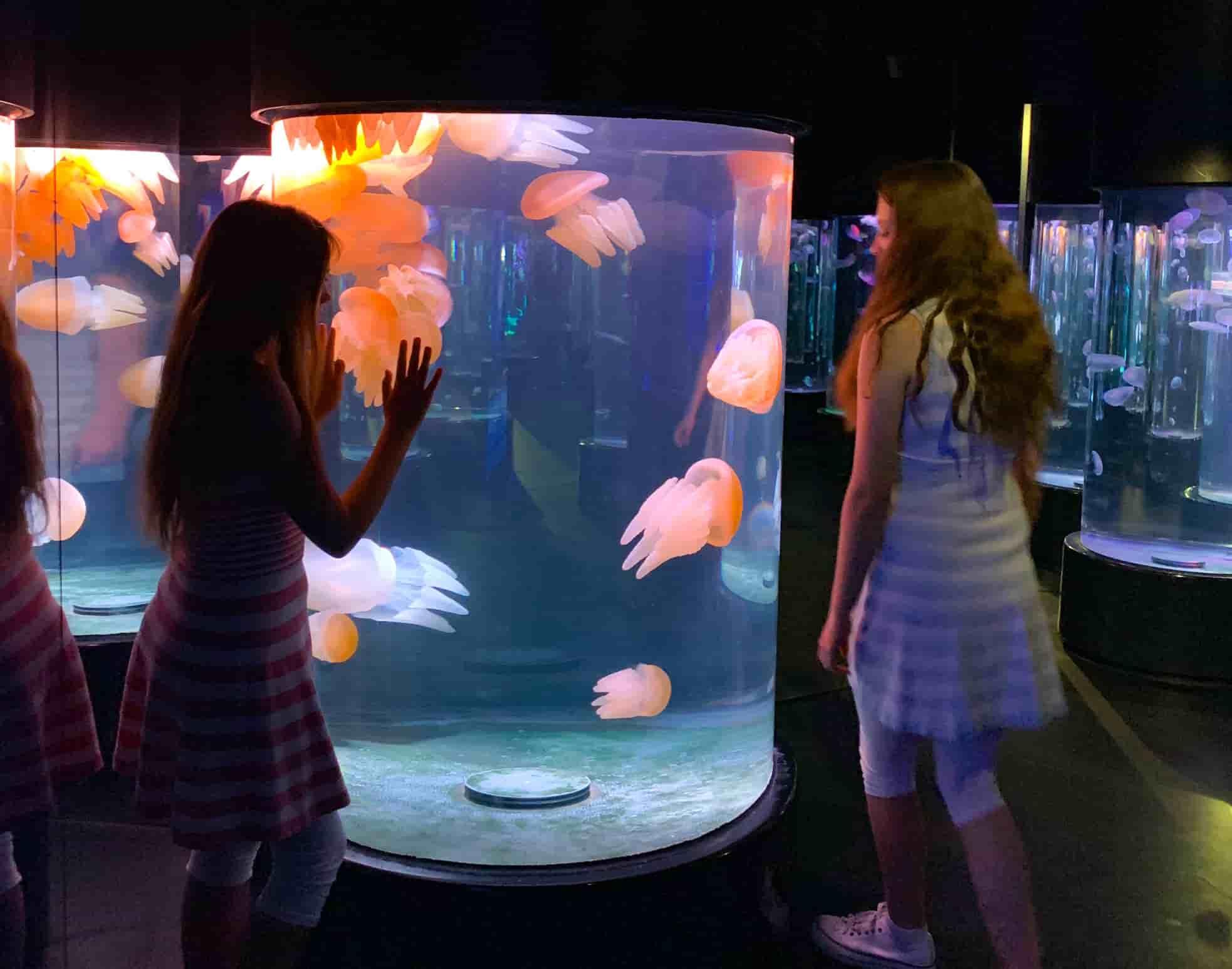 Sydney Aquarium jelly fish