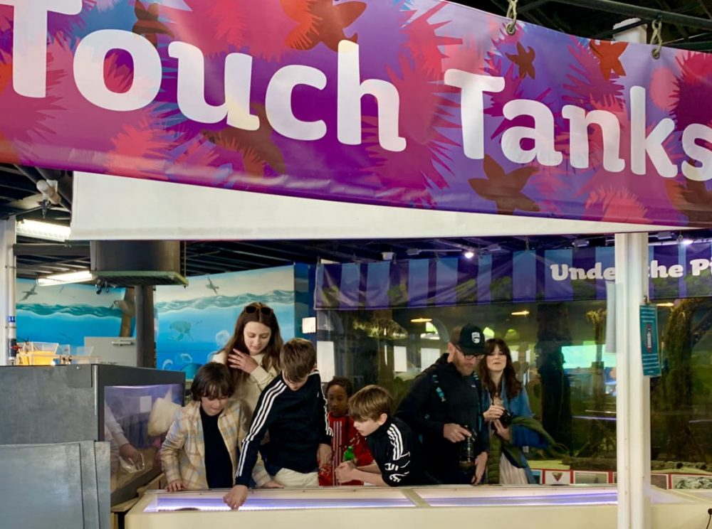 Touch tanks at Heal The Bay Aquarium