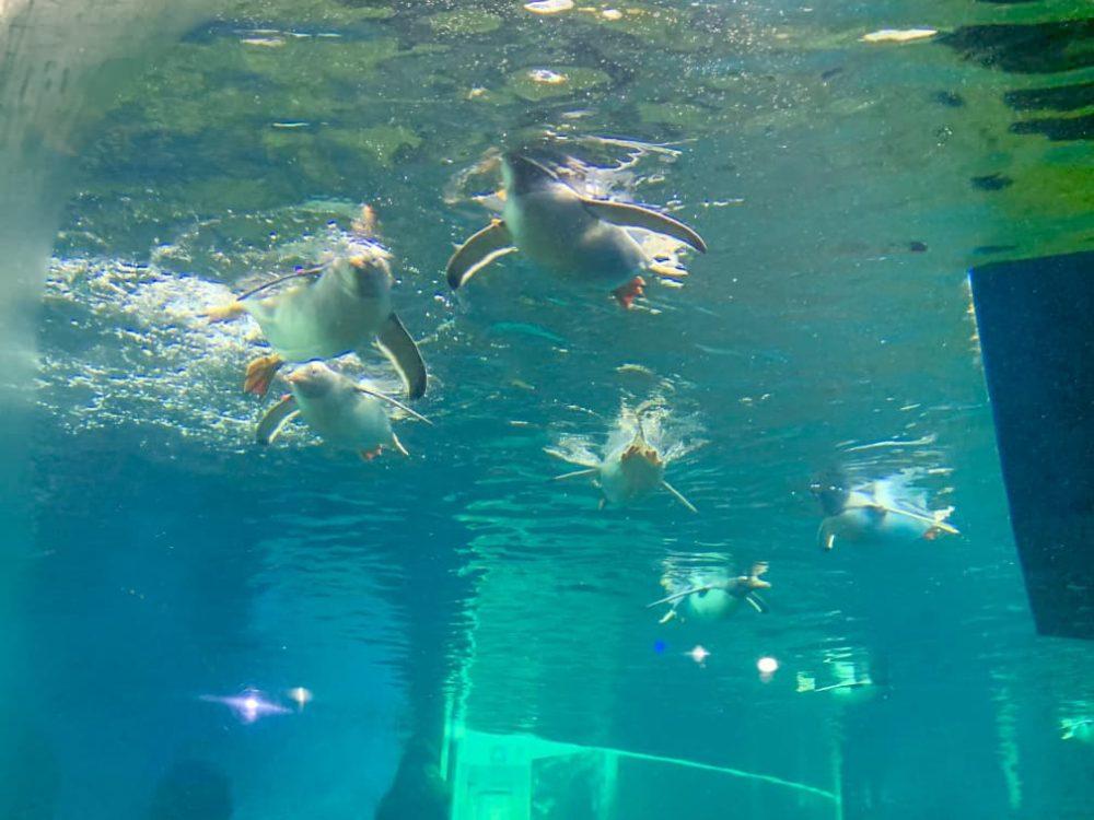 SEA LIFE Sydney Aquarium Little Penguins