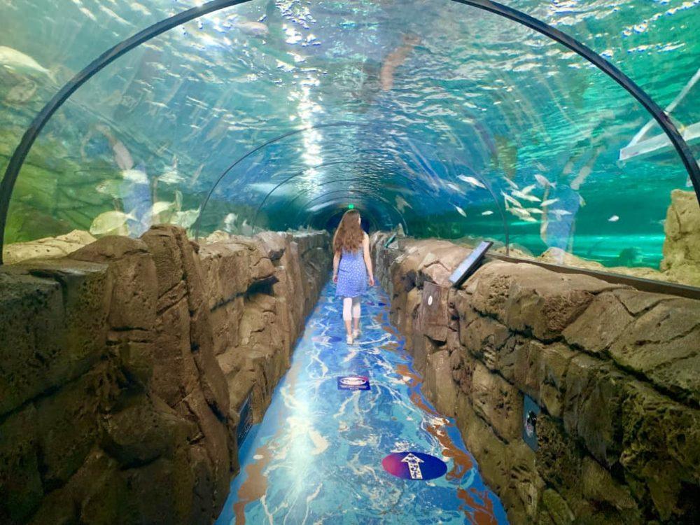 Sydney Aquarium walk through glass tunnels