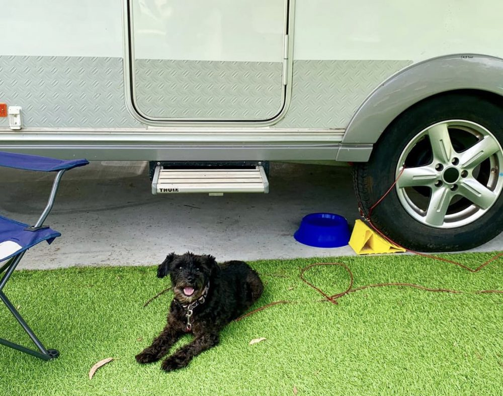 NRMA Treasure Island is a dog friendly caravan park