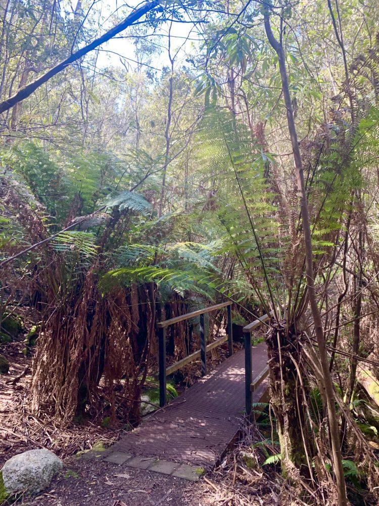 Tidbinbilla Nature Reserve Canberra - Canberra Bushwalks