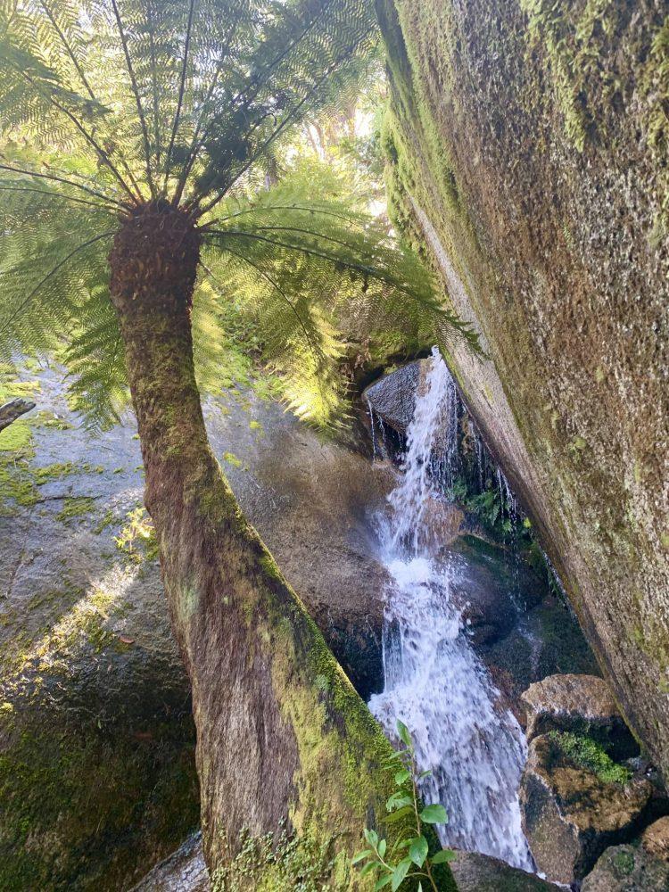 Tidbinbilla Nature Reserve Canberra - Cascades Bushwalk